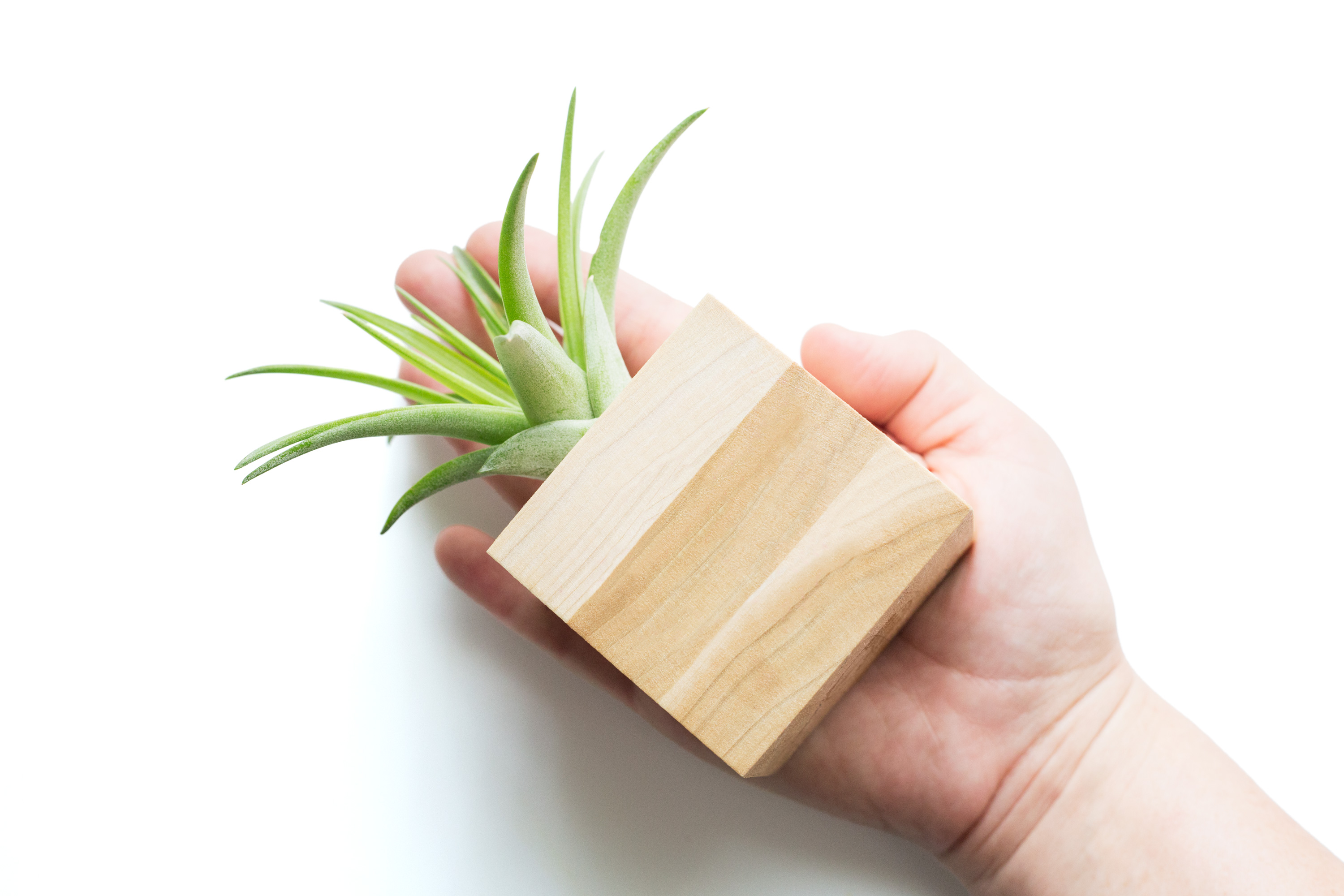 Lower Strip Air Plant Pot Wood Inspire Sitewide Free Shipping No Minimum Purchase